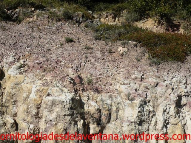 Paleodesembocadura de un antiguo y olvidado río en el mar interior donde se forjaron estas montañas. Los colores rojizos representan aportes de hierro, pero ese color en las margas indica un proceso sedimentario de origen continental. Imizcoz 2014-10-05