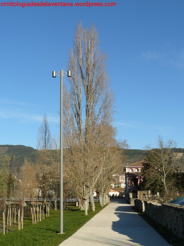 Parque de Aranzadi Iruña-Pamplona 2015-01-03