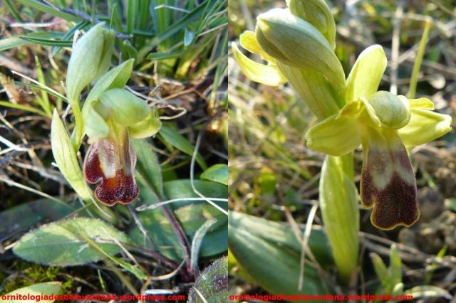 Variaciones de modelos de flor. Al comienzo de esta temporada las plantas era de tamaños muy reducidos. Ezkaba 2015-03-16